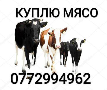А также вынужденный забой скота в частный КОЛБАСНЫЙ ЦЕХ