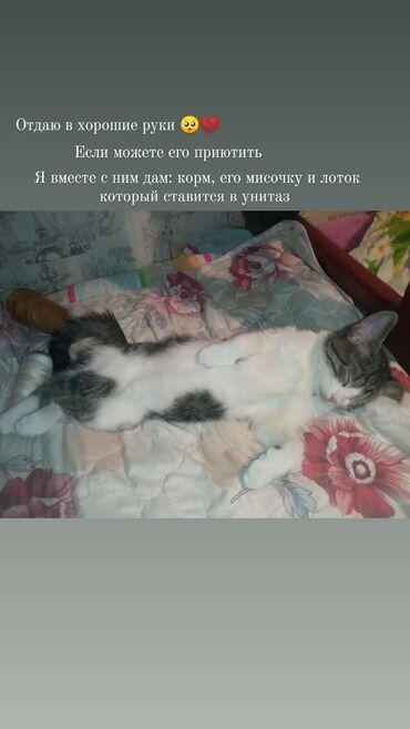18 объявлений   ЖИВОТНЫЕ: Его зовут Куська, ему 4 месяца (отдам в хорошие руки) могу привести