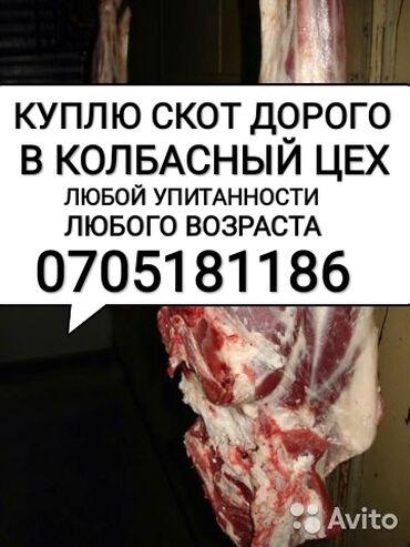С/х животные - Кыргызстан: ПОКУПАЮ С ВЫЕЗДОМ НА ДОМ