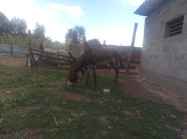 Другие животные - Беловодское: Продаются два ешка оканчательно