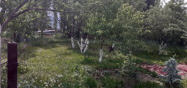 Недвижимость - Горная Маевка: 14 кв. м, 3 комнаты, Теплый пол, Сарай, Подвал, погреб