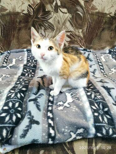 супер кудалар 2 in Кыргызстан | СУУГА ТҮШҮҮЧҮ КИЙИМ: Котята Маленькие котята-милашки ждут и надеются найти своих заботливы