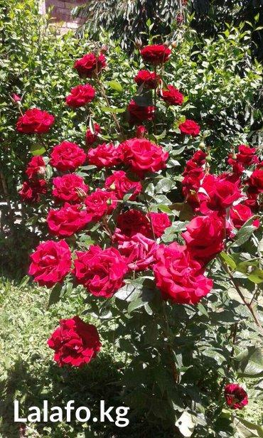 Требуется флорист с опытом работы в цветочный магазин! в Бишкек