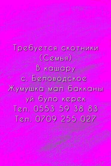 Работа - Беловодское: Требуется скотники (Семья) с. Беловодское