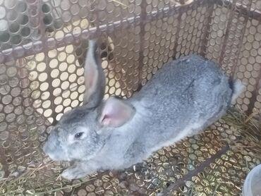 Продаю кроликов по 600