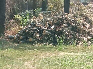 хендай портер цена в Ак-Джол: Продаю дрова. Портер 1000 тополь Карагач 1500.самовывоз берём всё