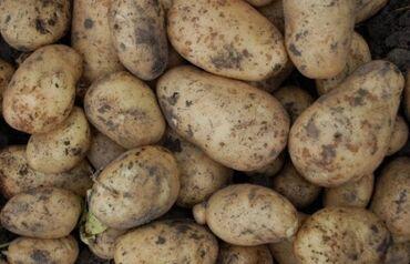 1 кг суши - Кыргызстан: Продается подмерзшая картошка, за кг. Самовывоз