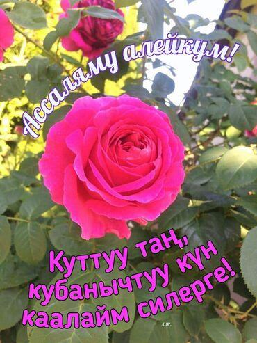 Сниму - Бишкек: Сниму