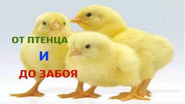Спец корм бройлер с высококачественным составом для   цыплят индюша