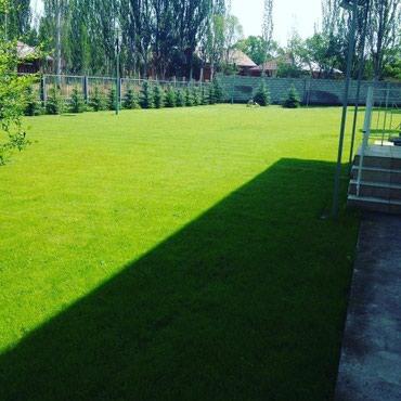 Сеем газон в Бишкек