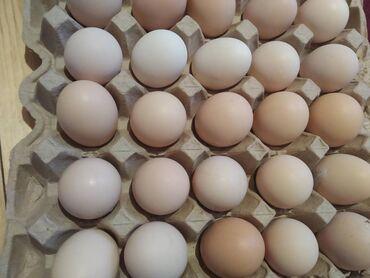 Mayalı Kuçinka yumurtaları (40 qəpik)