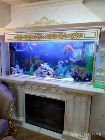 """Akvarium Mekani"" magazasi olaraq size akvariumlarin sifariwle"