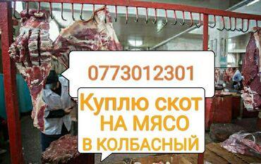 вакцины для животных в Кыргызстан: В колбасный цех куплю в любом виде в любое время