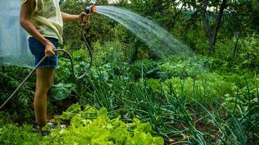 Работа - Дачное (ГЭС-5): Садовник охраник. ищет работу не пьющий ответственный опыт работы