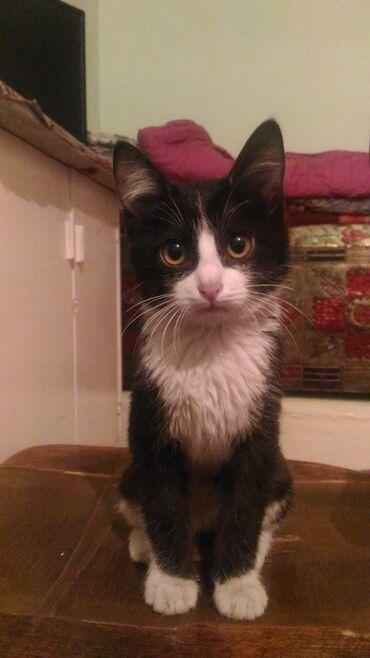 Коты - Ош: Примим котёнка в семью Будем заботиться с любовью