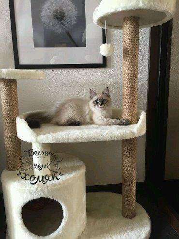 японская порода кошек в Кыргызстан: Продаю домики для кошек, когтеточки и игровые площадки . В наличии и