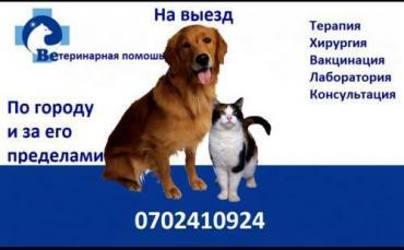 ветеринар-на-выезд-бишкек в Кыргызстан: Ветеринар . Ветеринарные услуги. Вет врач .Ветеринарный врач