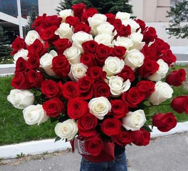 Голландские розы  Акция 101роза 8000сом в Бишкек