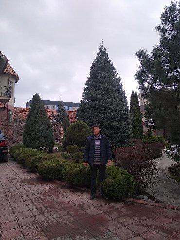 Бытовые услуги в Кыргызстан: Обработка и Обрезка хвойных и плодовых деревьев. От вредителей, от