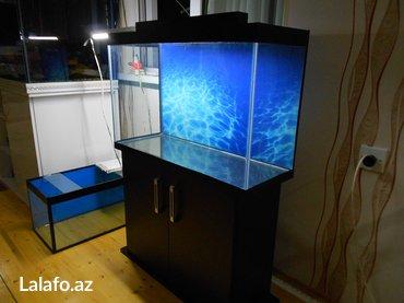 Bakı şəhərində teze akvarium ve teze mebeli ile birlikde munasip qiymete teze