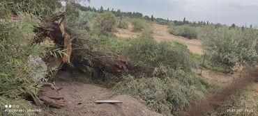 Находки, отдам даром - Дмитриевка: Отдам даром большое дерево на дрова. самовывоз