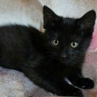 Есть любители чёрных кошек ?! Ставим и комент чтоб скорее пристроить