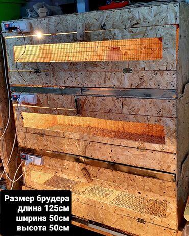 эндик чоп фото в Кыргызстан: Брудеры на заказ!. Любой размер!Читаем внимательно!1,2 фото Брудер для