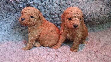 Για σκύλους - Αθήνα: Κουτάβια Δαλματίας για υιοθεσίαΚουτάβια Δαλματίας για υιοθεσία με όλα
