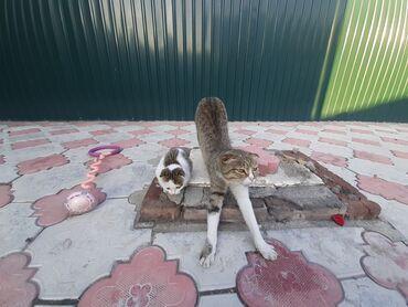 194 объявлений | ЖИВОТНЫЕ: Бесплатно Отдам котёнка (проглистованн) Мама вислоухаяПапа дворовой