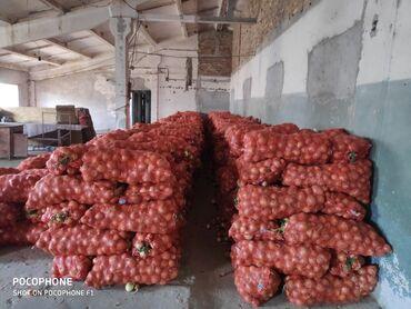 спринклер для полива полей в бишкеке в Кыргызстан: Лук(Пияз) 30 тонн.Хороший сорт,чистый,не больной!!!Капельного полива