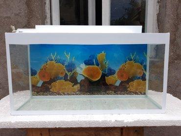 - Azərbaycan: Teze akvariumlara endirim wekildeki akvarium qapaqi var qapaqinda iwiq