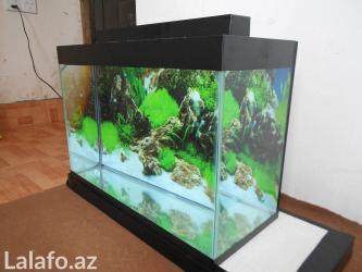 Bakı şəhərində Wekildeki akvarium  teze