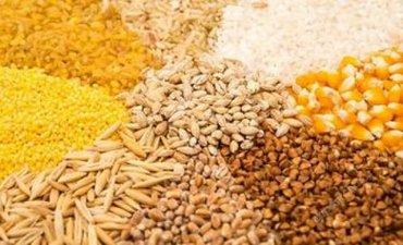 куплю-клетку-для-попугая в Кыргызстан: Куплю Ячмень цена 8.5, Кукурузу цена 14, свеше 20 тонн 14.5, Пшеницу