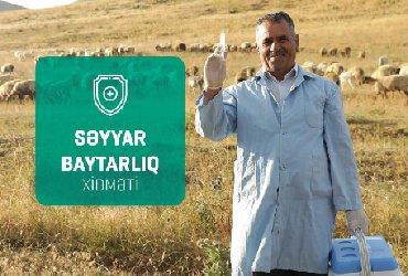 Salam Adım Özbək 55 Yaşım var Özüm Baytar Həkiməm Baytar Həkimi işi в Govsany