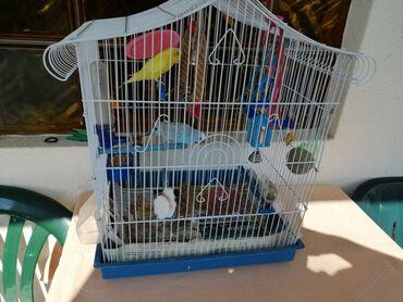 Quad - Srbija: Prodajem ptice tigrice sa jednim od ponudjena dva kaveza koji vi