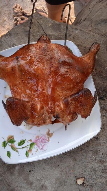 Животные - Жаркынбаев: Продаются цыплята Кобб 500. 10дневные срочно цена 150сом