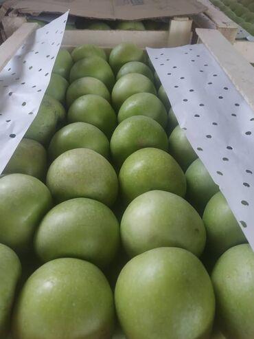 купить кошару в чуйской области кыргызской республики в Кыргызстан: Продаю яблоки вкусные, сочные экологически чистые с солнечного