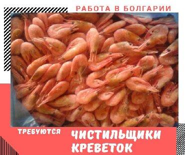 Работа чистильщик креветок в Болгарии Требования:ЖенщиныЗаработная