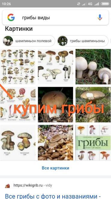 Продукты питания - Теплоключенка: Принимаем грибы кроме шампиньонов и других тепличных видов. Принимаем