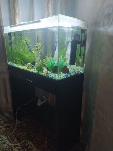Продаю аквариум на 200 литров Размер  С тумбой и со всеми содержимыми