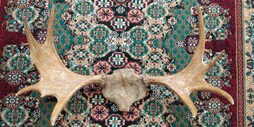 асус рог фон 2 в Кыргызстан: Рога лося