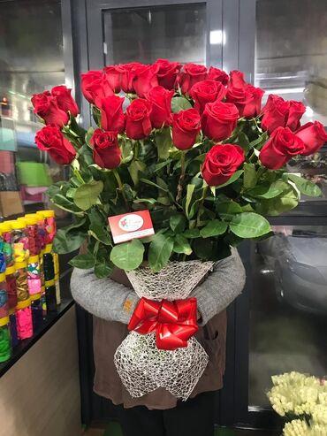 prodam fikus в Кыргызстан: Розы Кенийские и ГОЛЛАНДСКИЕ ♡ Оптовые цены на розы ☆ Свежая поставка