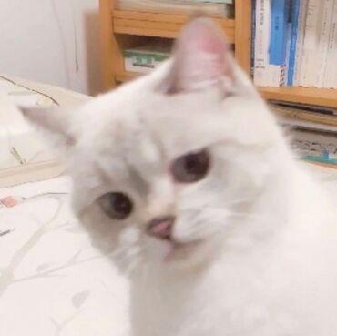 Возьму кота. желательно белого цвета. стерилизованного и без блохов