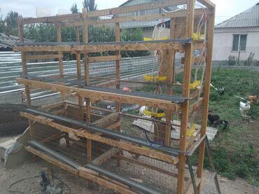 Животные - Джалал-Абад: Клетка для перепелов с автоматической поилкой цена 2000тыс