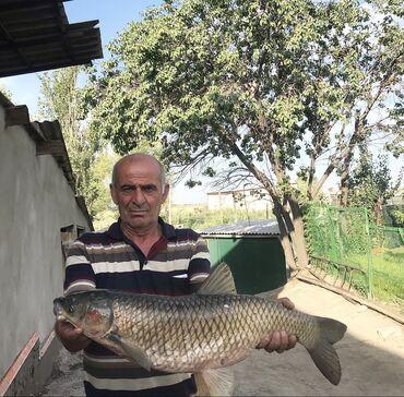 Летняя рыбалка  Все вопросы в чат за более подробной информацией зво