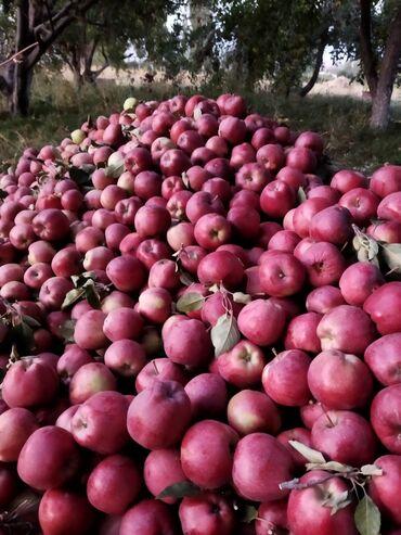 129 объявлений: Продается яблоки сорт привасход 25сом кг