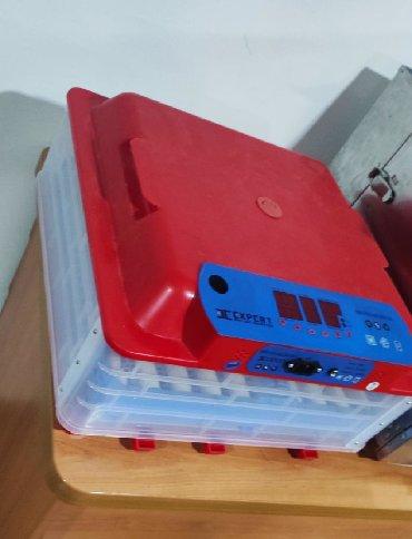 Inkubator inqibator inkibator inqubator63 yumurtaliq zavod inkubatoru