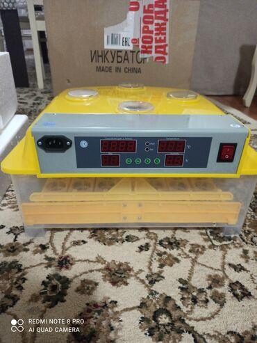 Inkubator WQ-48. Tam avtomat
