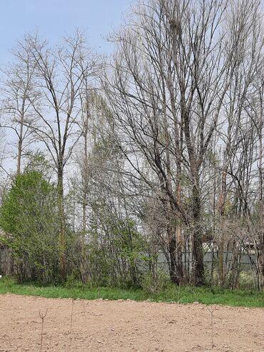 30 объявлений: Продам деревья,можно для дров,самовыз, Бак-дарак сатам отунга