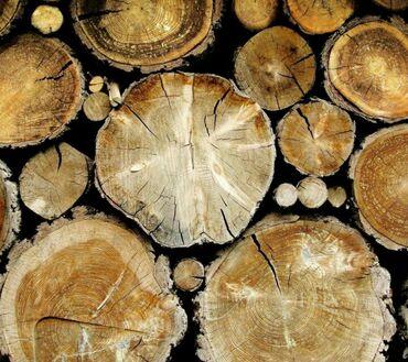 Другие услуги - Кыргызстан: Спил деревьев любой сложности, выезд и осмотр бесплатно, окончательную